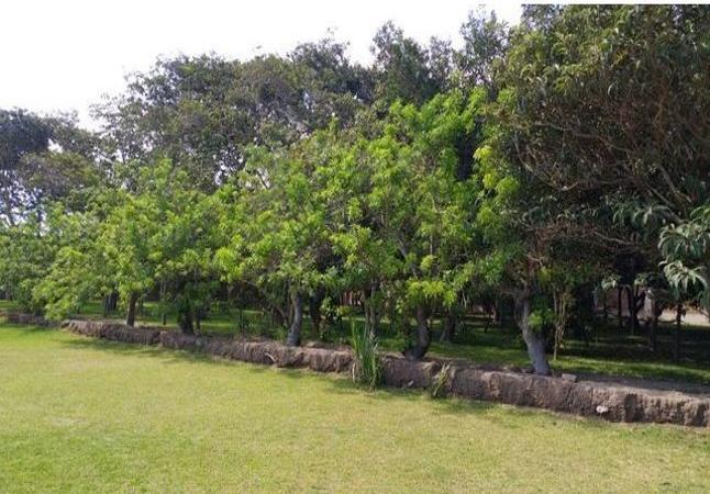 Terreno Ideal para Casa de Campo en Reque, Chiclayo