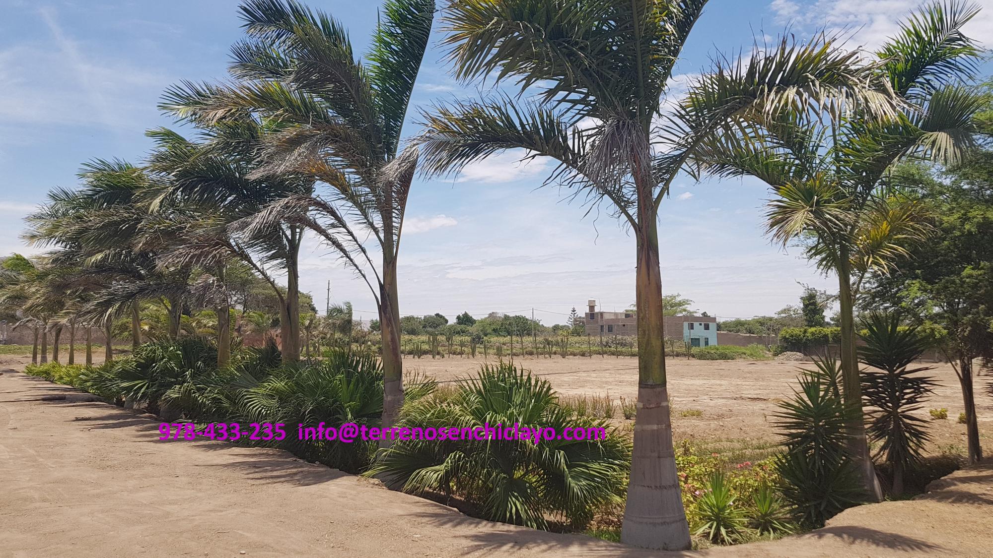 Terreno en Reque, Chiclayo a 60 mt de la Panamericana